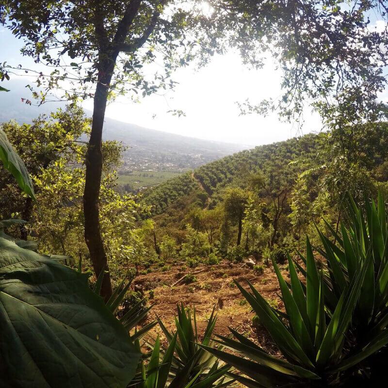 グアテマラ・サンタクララ・レッドハニーの生産地風景